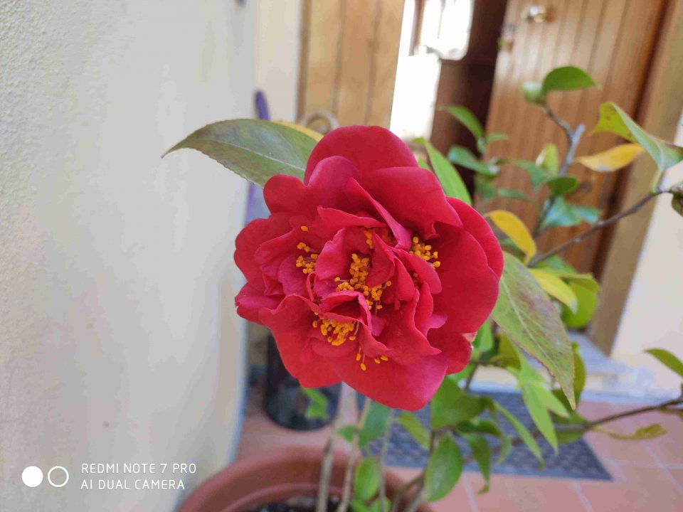 Sample foto da Redmi Note 7 Pro | Evosmart.it