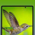 Samsung Galaxy Fold 2: confermata la presenza del foro