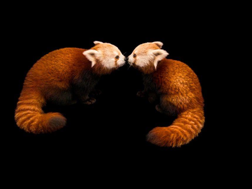 OPPO e National Geographic insieme per fotografare la vera bellezza della natura in un 1 miliardo di colori e proteggere le specie animali in via di estinzione